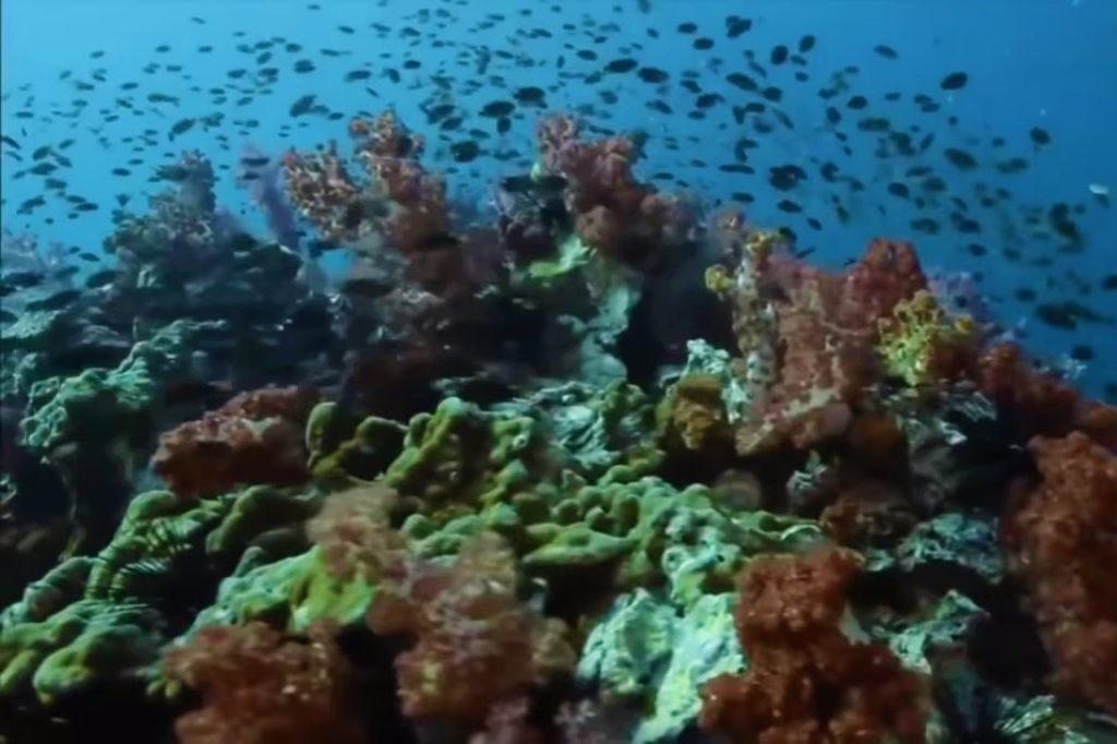 koralji_09052019_glasdalmacije
